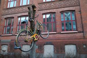 korporacja-rower-na-drzewie
